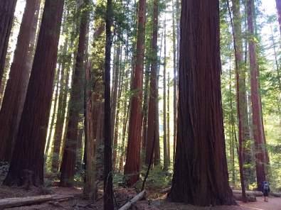 redwoodslezley